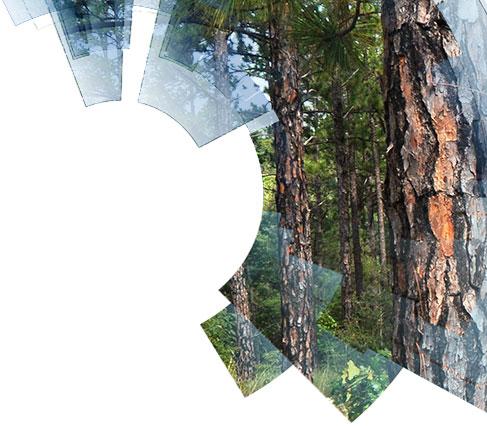 Manejo de Plantações Florestais de Alta Produtividade