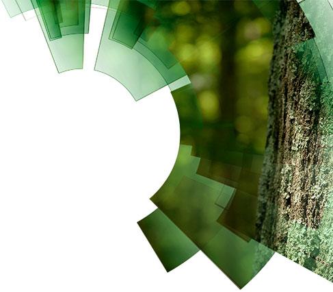 MBA Gestão Florestal