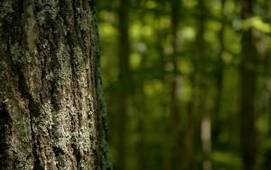 floresta-3 (2)