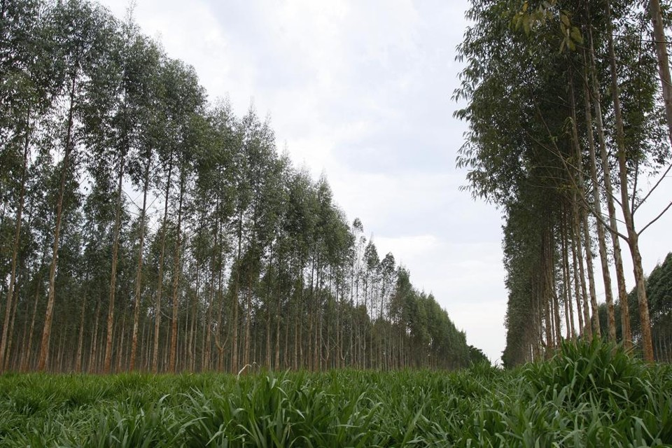 Todos os produtores rurais têm até o dia 31 de dezembro de 2017 para enviar as informações das propriedades para o Serviço Florestal Brasileiro