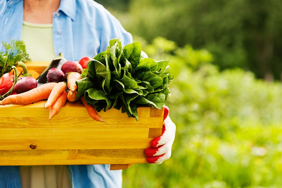 1-Agriculturaorgânica