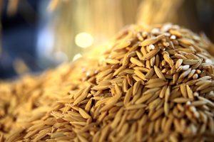 destaque-casca arroz