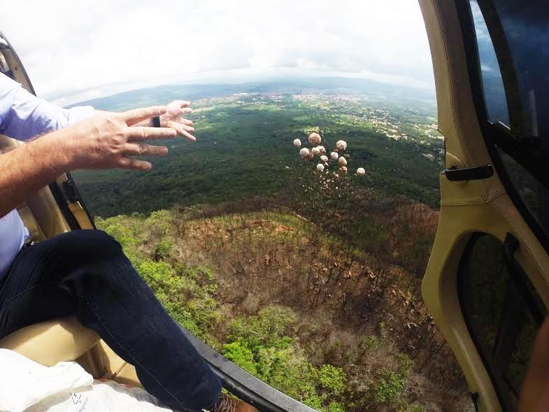 A perspectiva da Saaec é produzir e lançar na encosta da Chapada do Araripe 1 milhão de bombas de sementes, até o fim do ano.   Foto: Divulgação / SAAEC
