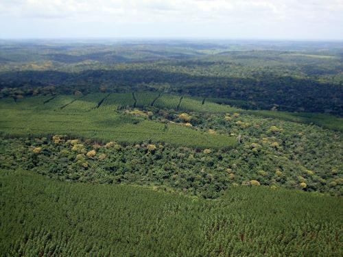 Vista aérea de mosaicos florestais. Foto: Gleison Rezende/BSC