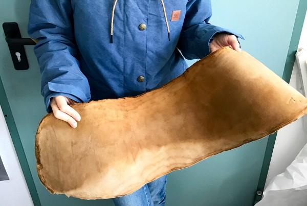"""De um único cogumelo é possível extrair o """"couro"""". Foto: Divulgação / MuSkin"""
