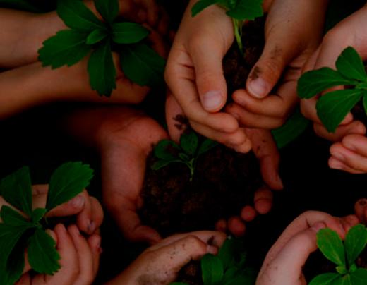 imagem do curso MBA Gestão Ambiental