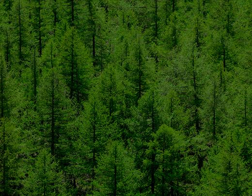 imagem do curso de MBA em Gestão Florestal