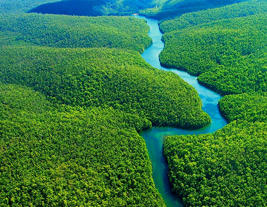 imagem do curso de extensão - Logística Florestal